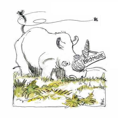 Rhinocéros-mutilations.jpg