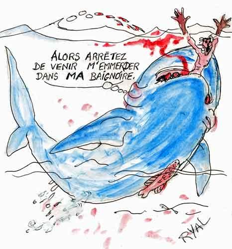 requin,attaque de requin,la réunion,plages australiennes,Floride,surfeur attaqué,
