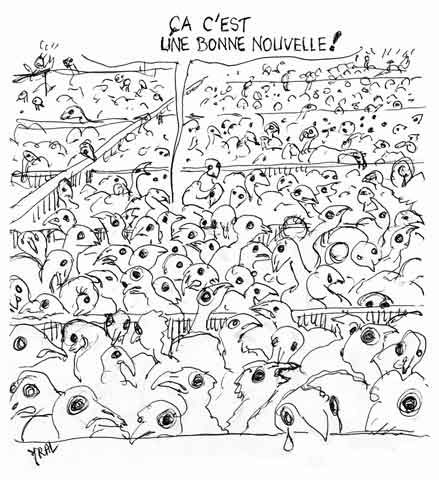 abattoirs Doux,Groupe Doux,fermetures entreprises,chômage,souffrance animal,protection des animaux
